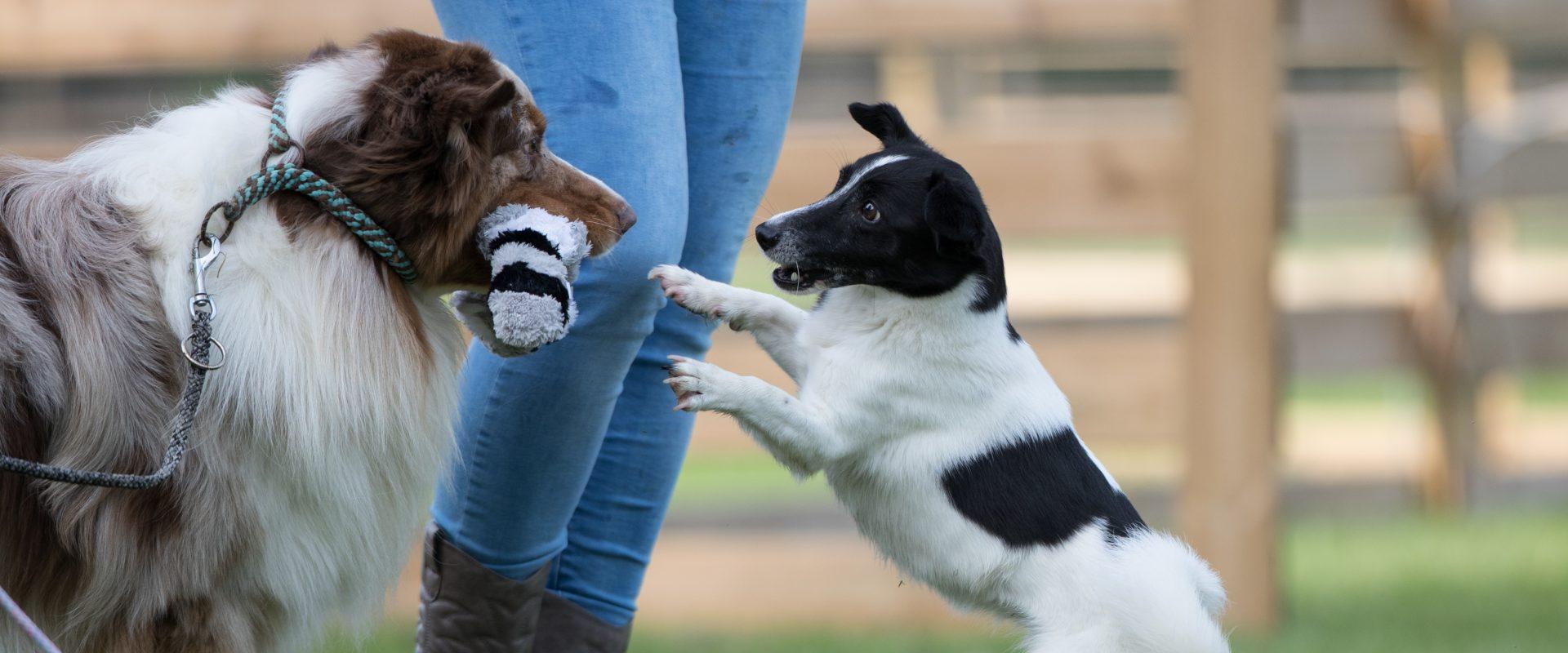Dogs Focus